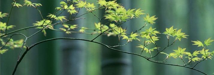 Chiropractic Maplewood MN Wellness Tree